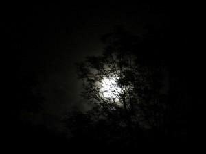 Soulfire Camp 2014 - Wolfsmond